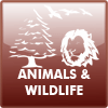animals_and_wildlife.png