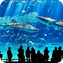 /images/aquariums_6