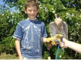 S & D Falconry - Solihull
