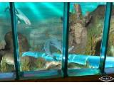 Sea Life Aquarium - Chessington