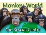 MONKEY WORLD - WAREHAM