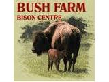Bush Farm Bison Centre - West Knoyle