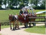 Dorset Heavy Horse Farm Rescue Centre, Verwood