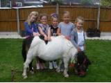 Pony Parties Leicester Pets and Farm Animals