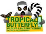 Tropical Butterfly House, Wildlife & Falconry - North Anston