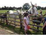 Radcliffe Donkey Sanctuary