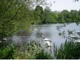 Rickmansworth Aquadrome Nature Reserve