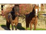 Dean Riding Stables